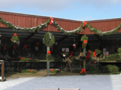 Image for Hann's Christmas Farm